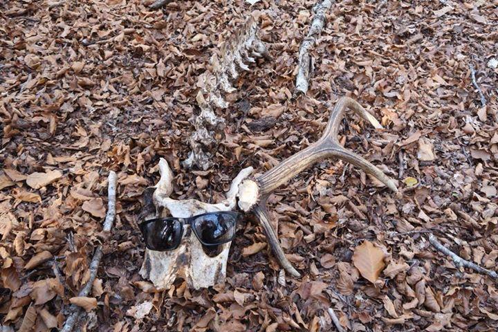 Rando brame du cerf ? dans le bois ...