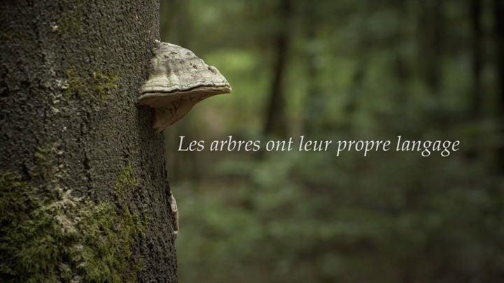 C'est beau Si tu étais un arbre, qu...