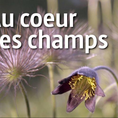 Les secrets des fleurs sauvages (5/5) | ARTE